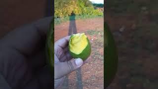 En los Mangos en Santa Rita Jalisco