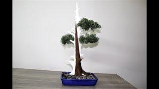 How to make a Artificial White Cedar Bonsai Tree.