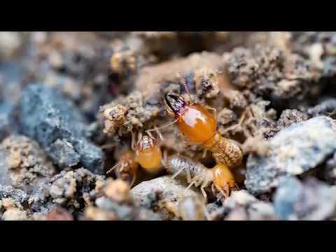 Boston Termite Control Services   B&B Pest Control