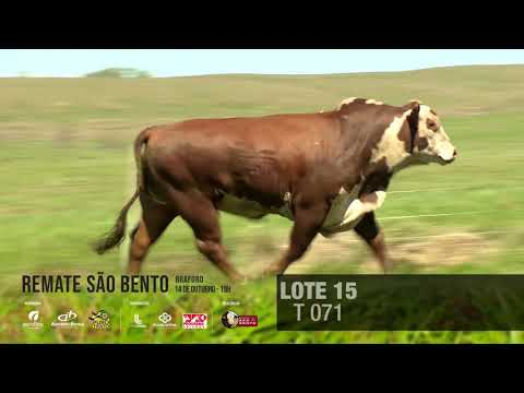 LOTE 15 T 071