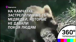 На Камчатке идет настоящая война между медведями и людьми