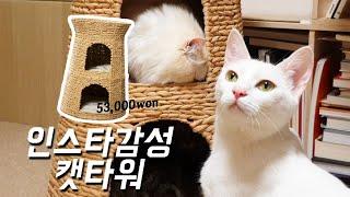 5만원 캣타워 언박싱♪ 고양이 키우는집도 인스타 감성 방꾸미기 가능하다구요~