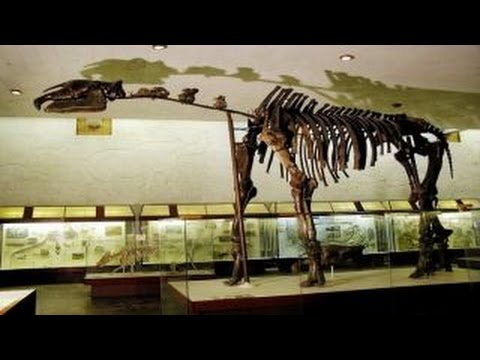 Paraceratherium | Enciclopedia sobre Dinosaurios