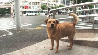 中国上海市黄浦区 老西门バスターミナルの近くで佇む1頭の犬。 飼い主...