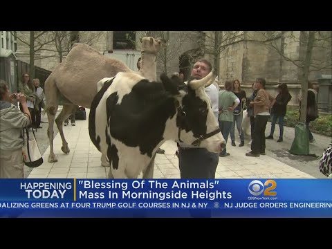 'Blessing Of The Animals' Mass In Morningside Heights