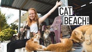 We Found a CAT BEACH!! 😻  + Beautiful Penang Home Tour (Penang, Malaysia)