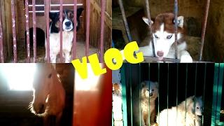 Влог: Как мы с Кирюшей посетили Приют/Питомник К9 :)