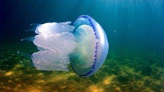 Медуза-корнерот. Страшная и ужасная (три мифа)