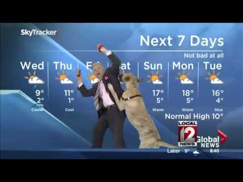 The Cooler: Dog interrupts weather forecast