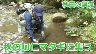 秋の阿仁マタギに集う ~秋田の渓流~ / みちのく釣りの旅  フライフィッシング渓流釣り(4K) fly fishing tohoku-jp
