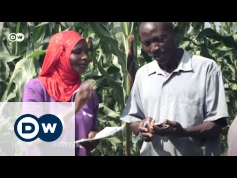 Checking the weather for coffee | Eco-at-Africa