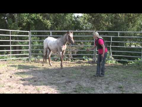 Mia Og De Vilde Mustanger I USA. Afsnit 01. When Horses Choose. Mia Lykke Nielsen.
