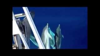 DELFINES Compañeros de viaje / Travel mates Catamaran Ibiza CharterALIA
