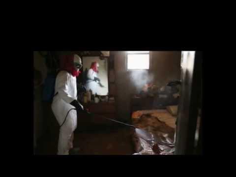 New Ebola Virus 2014- Ebola Virus outbreak 2014