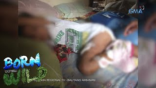 Born to be Wild: Rabid dog attacks a six-year-old kid in Pangasinan