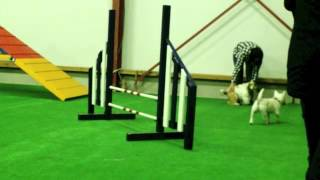Repeat youtube video Honden school Martin Gaus Hellevoetsluis Behendigheid marvin
