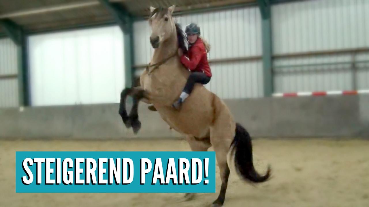 Voor Het Eerst Steigeren Met Een Paard Vlog 32 Youtube