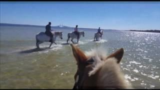 CYPRESS BREEZE Beach Horse back Rides Tampa Bay FLorida