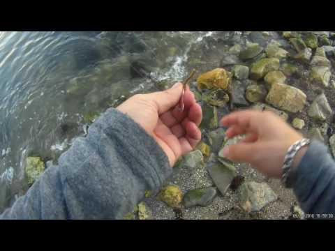 рыбалка на черном море с берега на спиннинг в июне видео