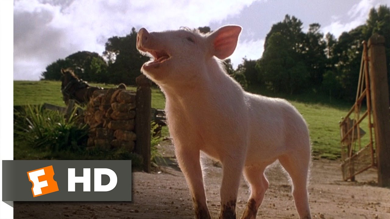 Babe full movie pig 1995 english-9842