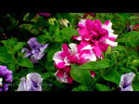 My Garden In Summer 2010