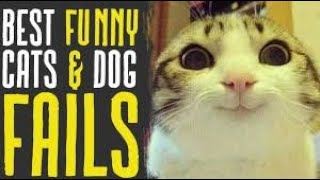 Funny Cats and Dogs videos compilation Tiktok videos 2019 | Funny Tiktok Videos|The Tiktoker zone
