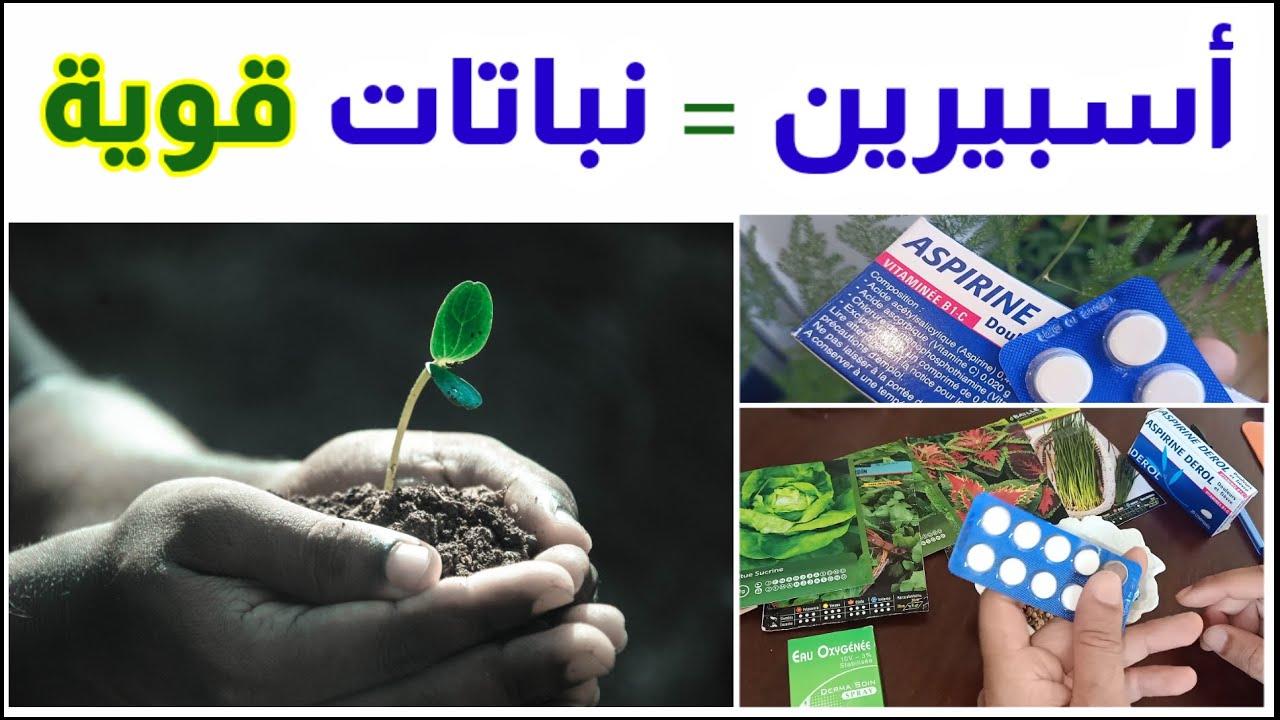 فوائد الاسبرين للنباتات, مبيد فطري و حشري و محفز انبات آمن و رخيص و طبيعي. Aspirin