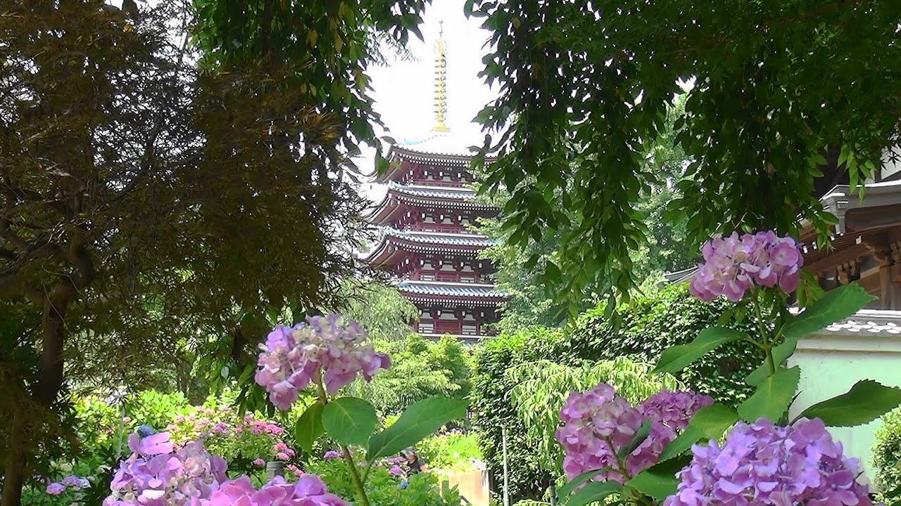市 松戸 本土 寺