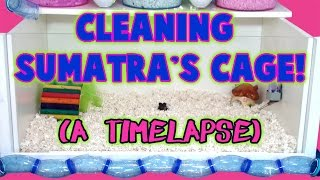 Cleaning Sumatra's Cage! (A Timelapse) Thumbnail