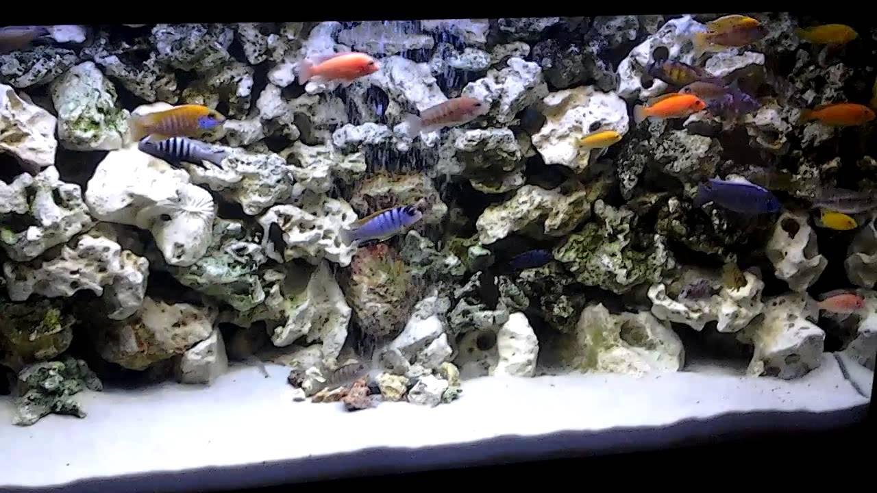 Decor Aquarium Cichlides Africains