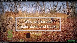 deer-hunting-q-a-why-do-you-harvest-does-5qa-growingdeer-tv