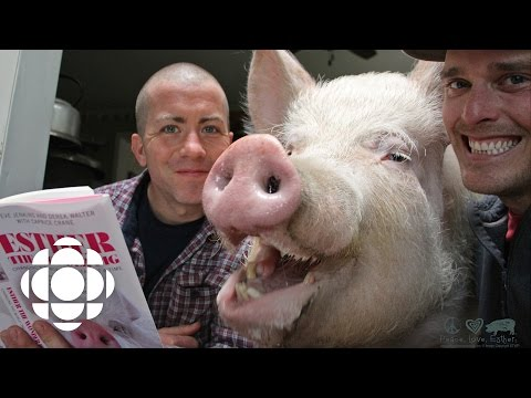 Meet Esther the Wonder Pig | The Current | CBC