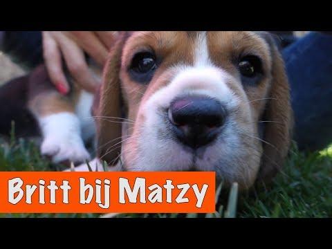 Download Youtube: Britt bezoekt puppy Matzy! | DierenpraatTV