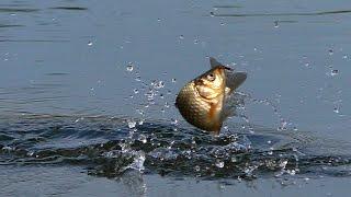 КАРАСЬ НА ПОПЛАВОК НА УТРЕННЕЙ ЗОРЬКЕ Рыбалка на удочку Рыбалка на карася