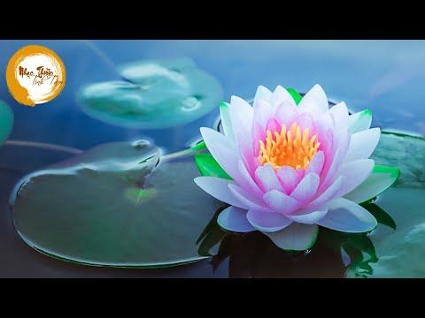 Nhạc Thiền Tĩnh Tâm - Cuộc đời như nước chảy hoa trôi, chỉ có tình thương để lại đời