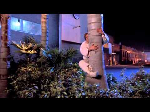 Beverly Hills Ninja Palm tree scene