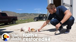 Feral Dog Has Never Wagged His Tail Before | The Dodo Faith = Restored