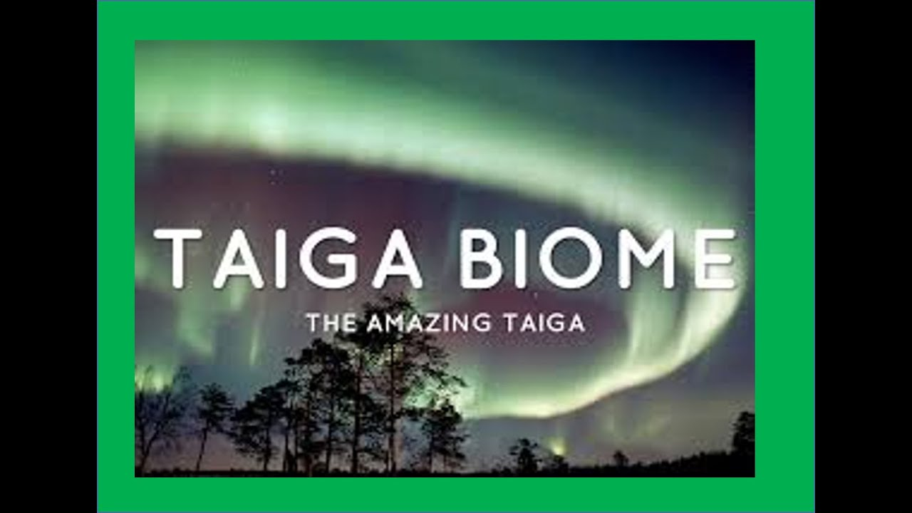Taiga (Conifrerous Forest) Biome - Facts about Animals ,Plants and ...