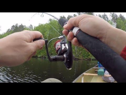 Way-Too-Easy Walleye Fishing On Sawbill Lake, BWCA