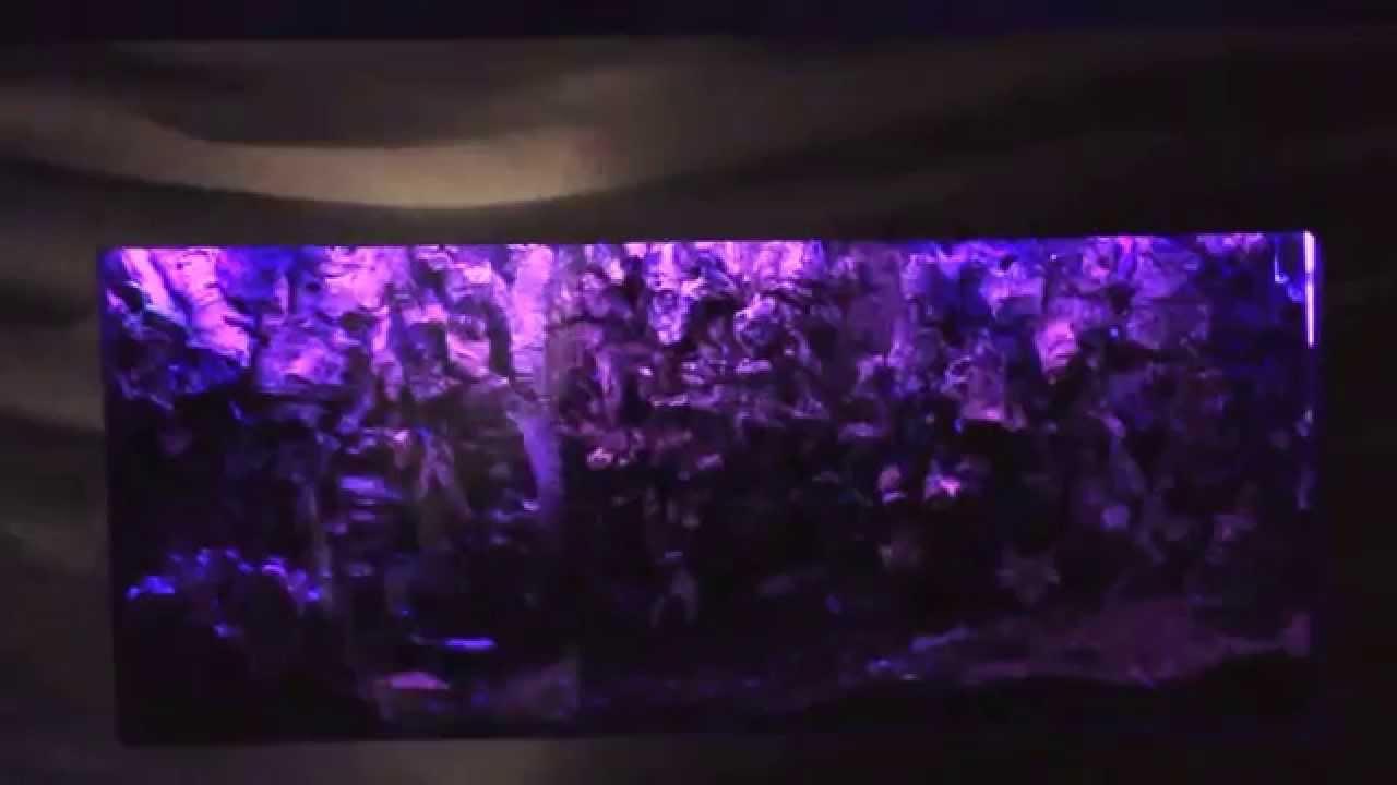 Scorpion vivarium under UV Lighting & Scorpion vivarium under UV Lighting - YouTube azcodes.com