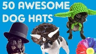 50 AWESOME DOG HATS - CUTE HAT IDEAS PRESENTED by Cooking For Dogs