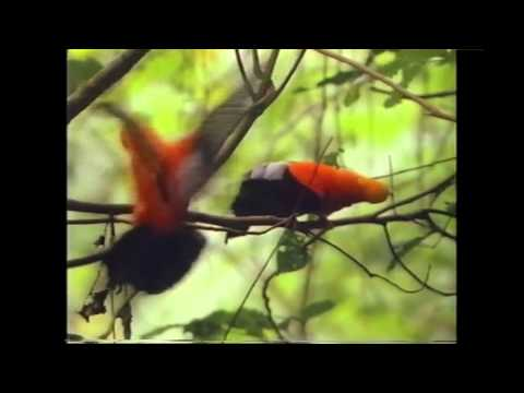 Amazing Animals: Animal Colors (Part 1 of 2)