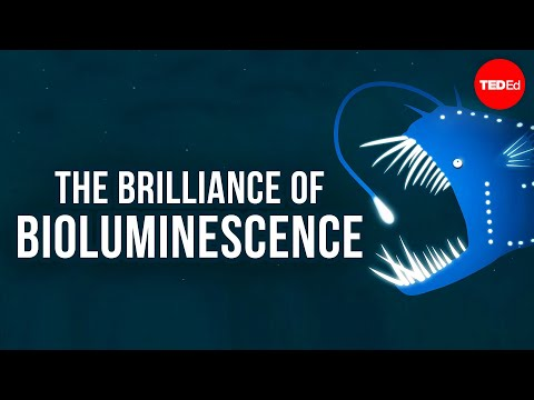 The brilliance of bioluminescence - Leslie Kenna