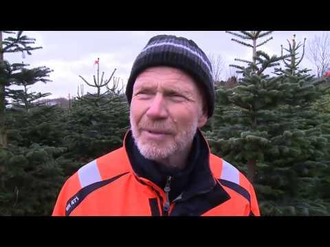Full fart i julgransskogen