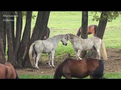 🐎🐎 All The Pretty Little Horses 🐴 Lullaby 🐎🐎 Baby Sleep Songs To sleep🐴 Pretty Little Ponies
