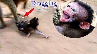 Daniela got worse by crushed on hard thing, DeeDee dragged baby Daniela in long distance