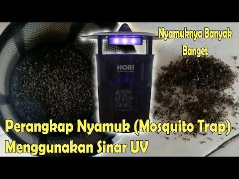 DAUN AJAIB!!, Taruk Ini, Tikus Rumah Keok Tanpa Racun || Cara Mengusir Tikus Alami Dari Rumah Assala.