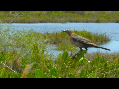 Florida Travel: Merritt Island National Wildlife Refuge