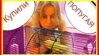 Карантин и адаптация попугая. Купили пару своему попугайчику💞 Лайма дома! Ура! #Птицы