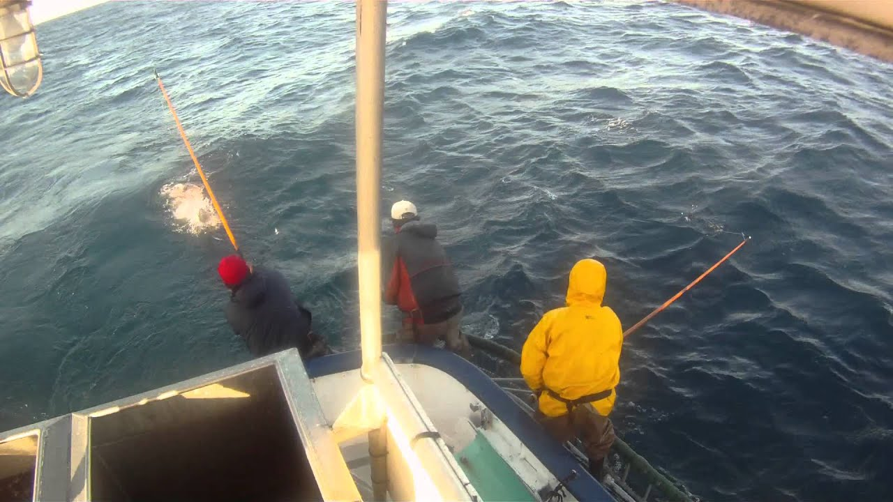 Commercial tuna lift pole fishing sept 16 2011 youtube for Tuna fishing pole